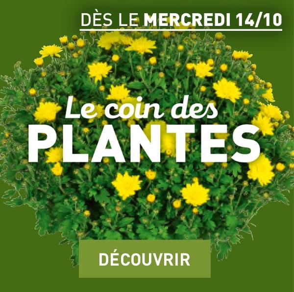 Le coin des plantes - Découvrir