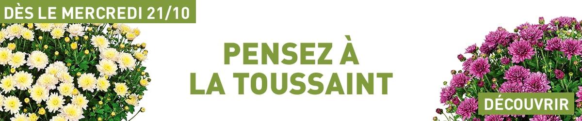 Pensez à la Toussaint - Découvrir